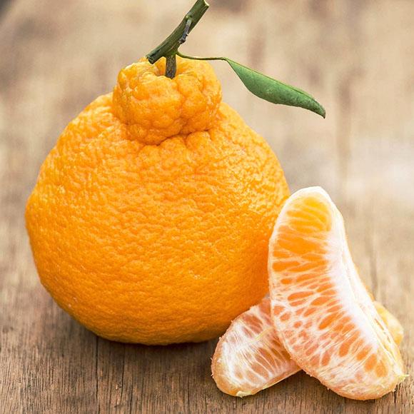 丑橘(丑八怪)