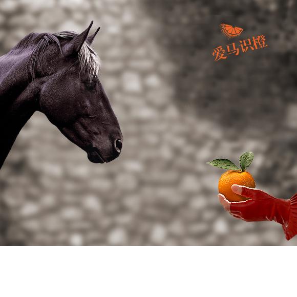 爱马识橙 轻奢回归 愿与伯乐慧眼识良橙。