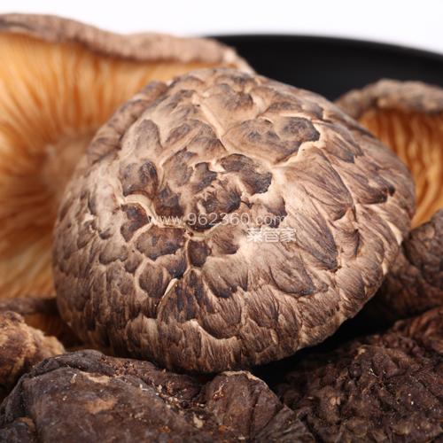 婺源椴木香菇