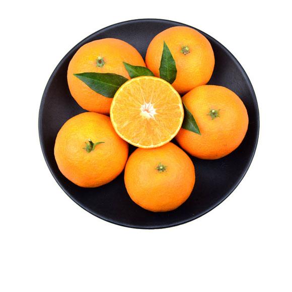 爱媛38号橘橙(管家装)