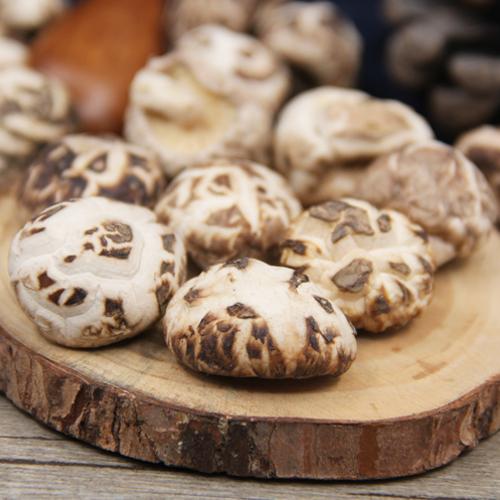东北椴木小花菇