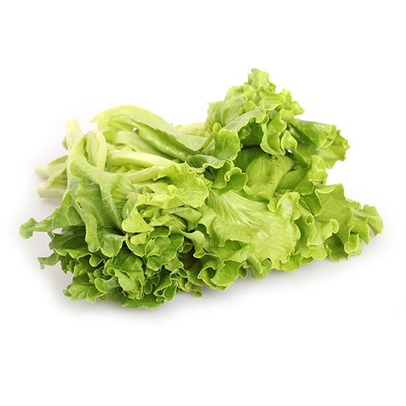 青浦有机绿叶生菜