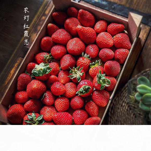 来和草莓谈场甜甜的恋爱吧 草莓使我快乐