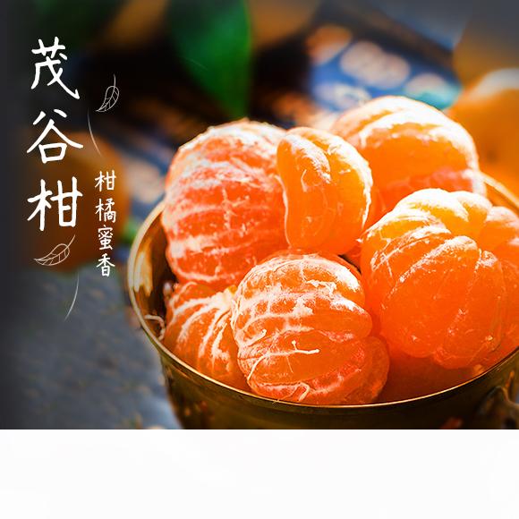广西茂谷柑 浓甜多汁 柔嫩细腻