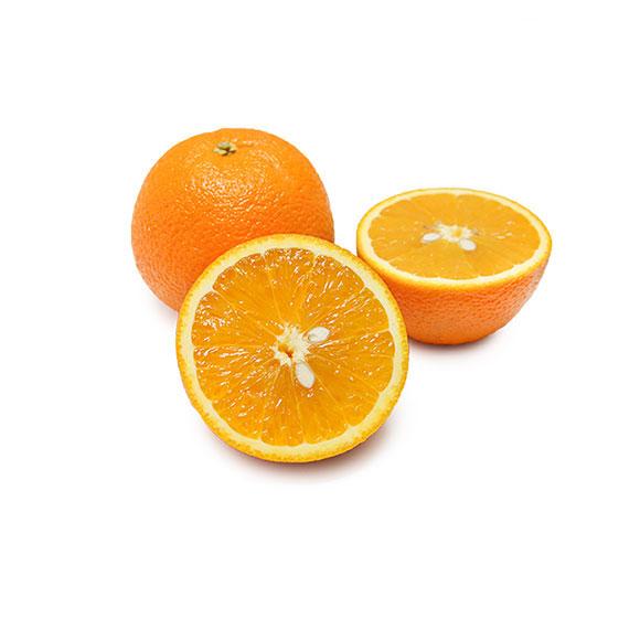 南非橙12只