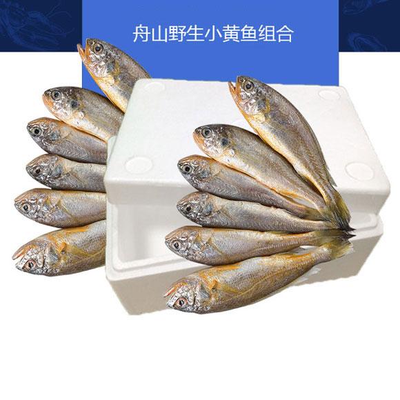 舟山野生小黄鱼组合装