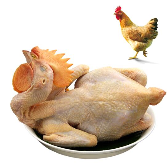 溫氏 供港農養雞 800g 大公雞燒雞公火鍋食材 高品質供港雞 農家散養土雞走地雞草雞柴雞整雞 散養90天以上