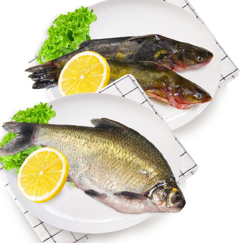 光明漁業昂刺(冰鮮)+鳊魚(冰鮮)