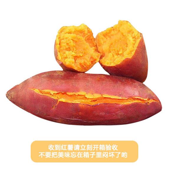 山东济南红薯