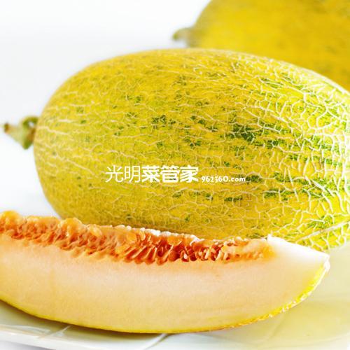 海南哈密瓜