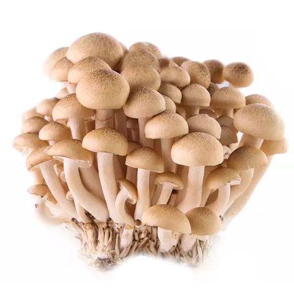森源蟹味菇