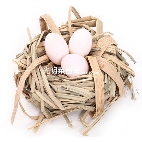 新鲜农家鸽子蛋12枚装