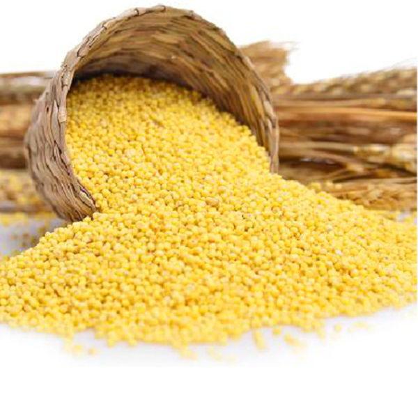 清水原牧有机大黄米