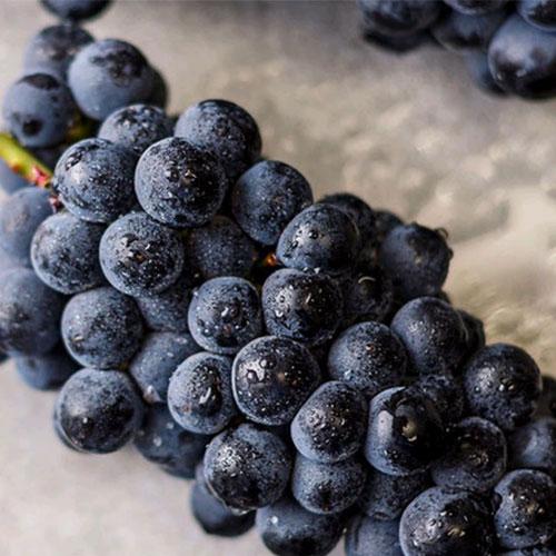 崇明夏黑葡萄