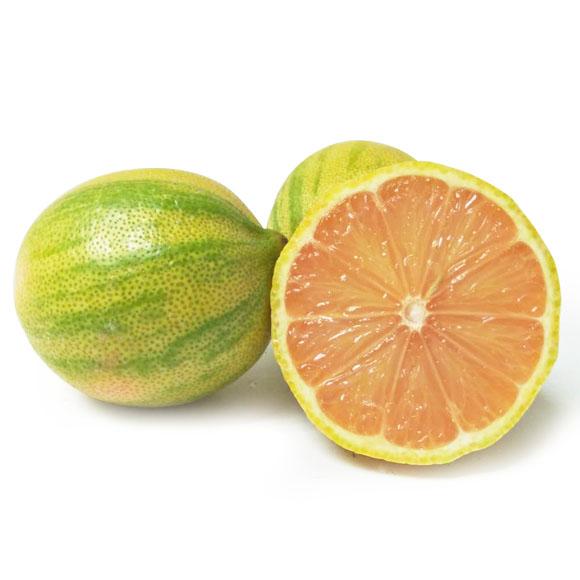 美国斑马粉柠檬
