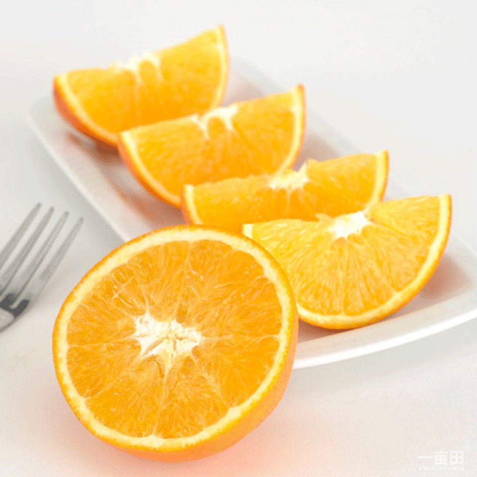 澳洲新奇士脐橙 12只装
