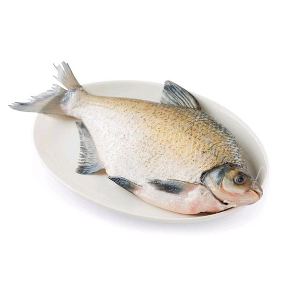 太湖野捕鳊鱼