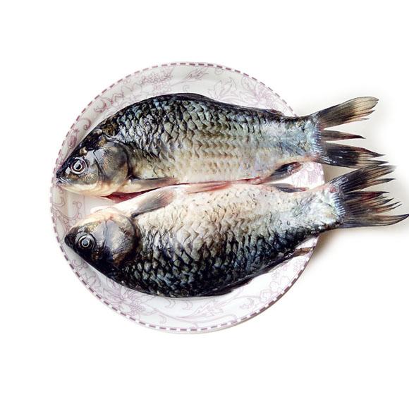 太湖野捕鲫鱼