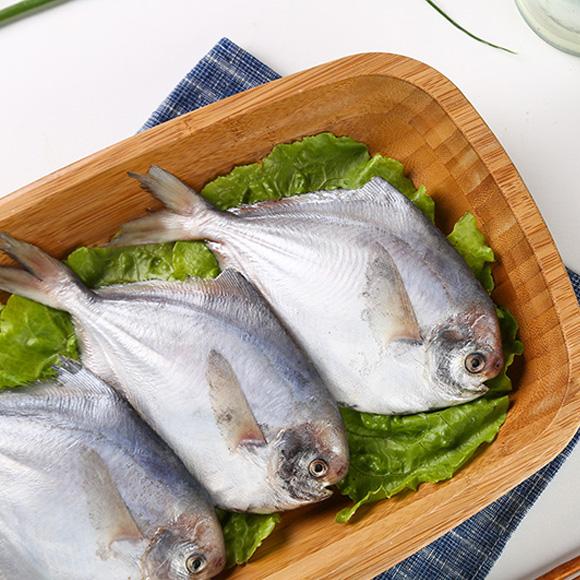 舟山野生鲳鱼(2-3两/条)