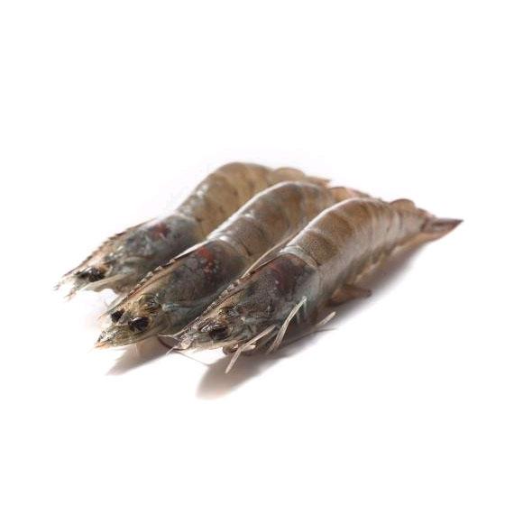 蓝水缘马达加斯加海虎虾(15-16只)