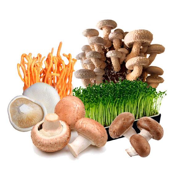 蔬菜菌菇火锅套餐