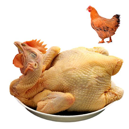 温氏 供港黄油鸡 1kg 高品质供港鸡 农家散养土鸡 散养母鸡走地鸡 烤鸡烧鸡整鸡 散养90天以上
