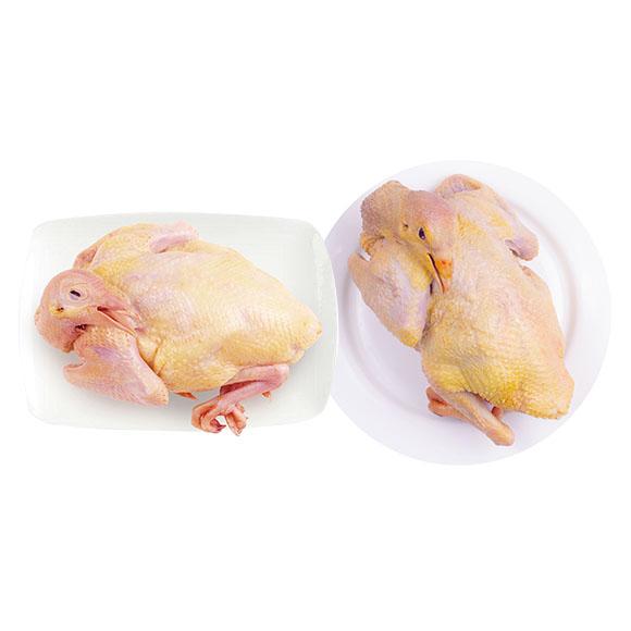 农家散养乳鸽1只老鸽1只