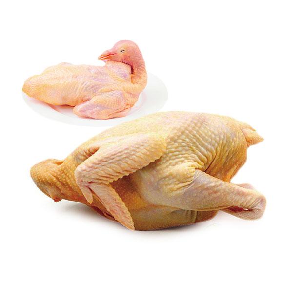 农家散养乳鸽1只走地鸡1只