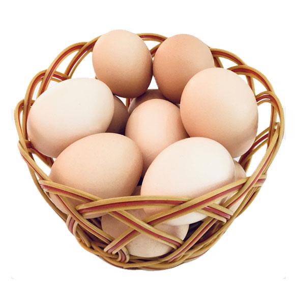 苏北黑水虻虫土鸡蛋