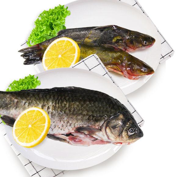 光明渔业昂刺(冰鲜)+小鲫鱼(冰鲜)