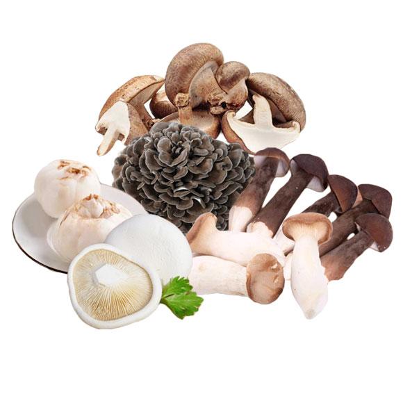 新鮮菌菇組合A