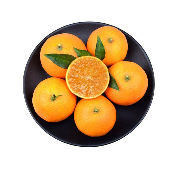 浙江红美人柑橘