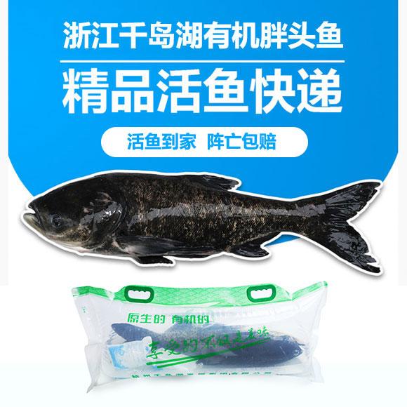 浙江千岛湖有机胖头鱼(活体)